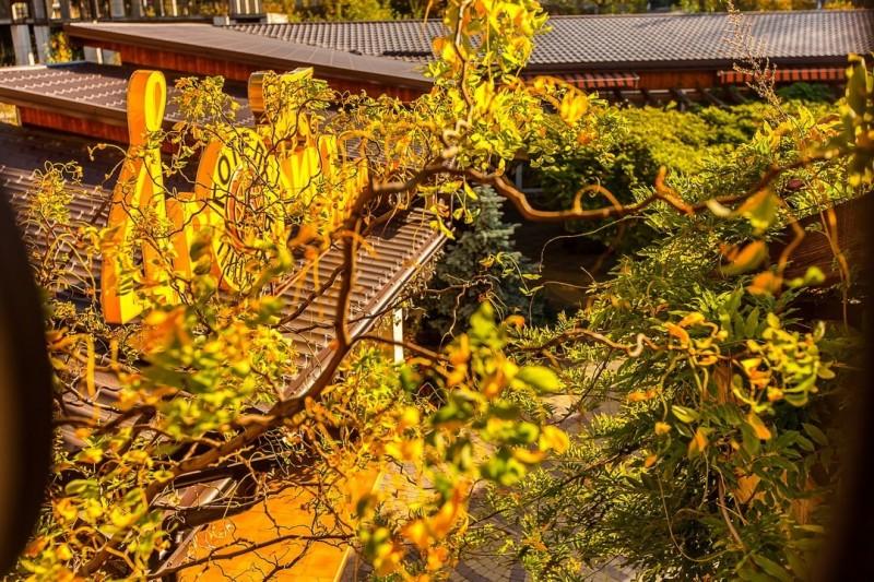 Dvoryk-leva-truskavets-26